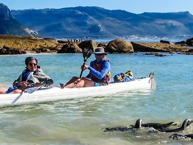 Kayaking with Penguins - Cape Adventure Zone