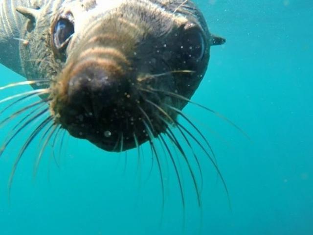 Seal Snorkeling