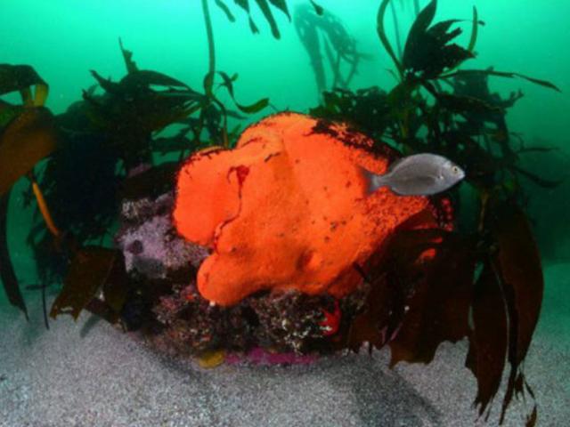 Wreck & Reef