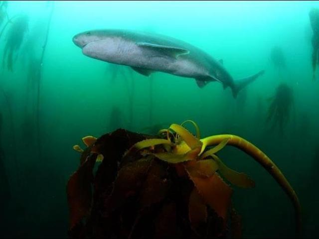 Sea & Kelp
