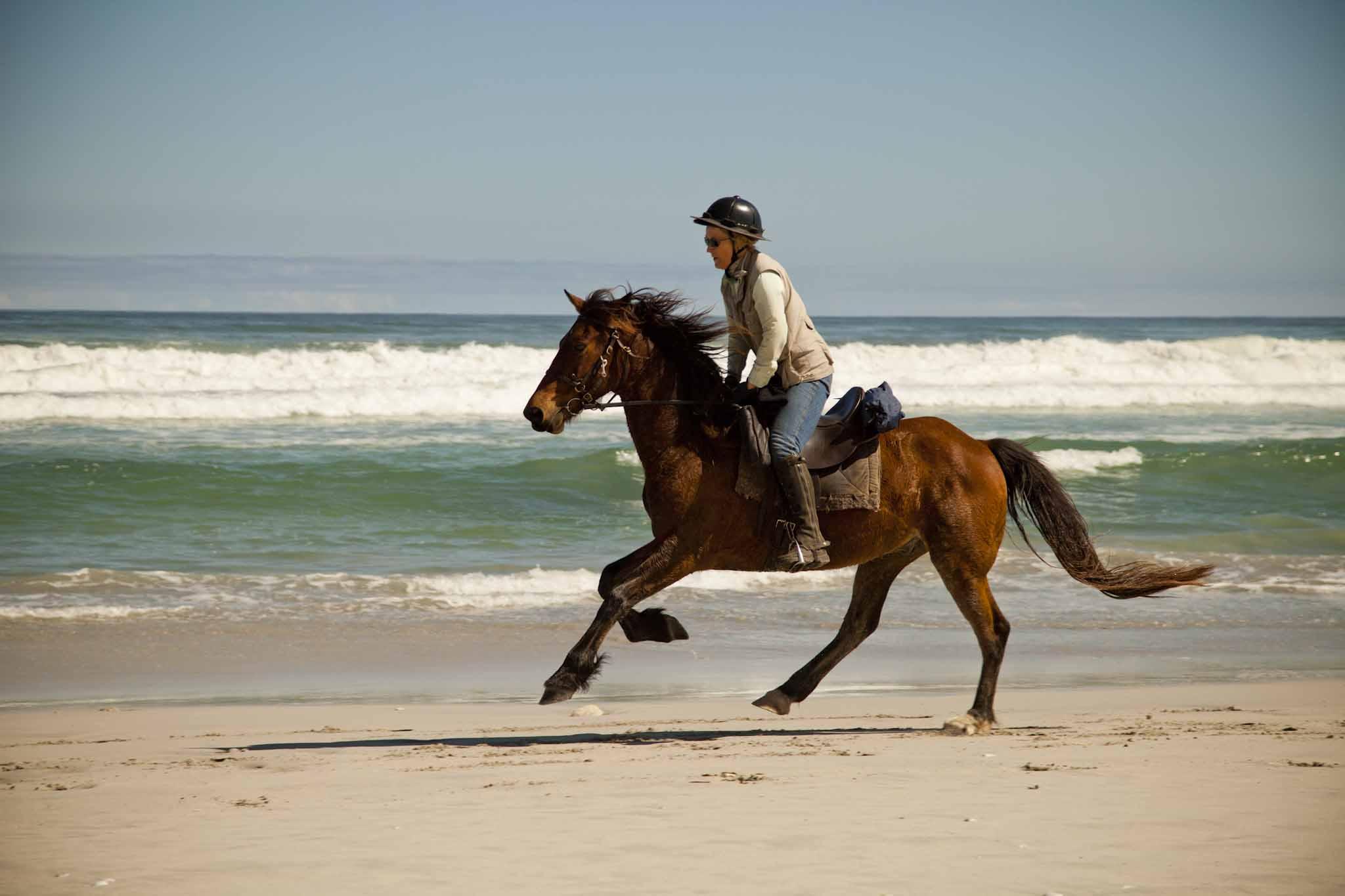 Gansbaai Beach Ride   Cape Adventure Zone